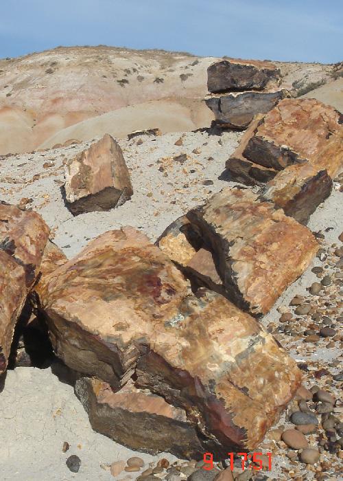 Paysages fossiles en Argentine