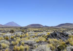 Le Payún Matru et le volcan Herradura