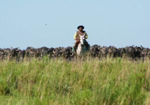 Troupeau de bufalos, Corrientes