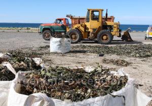 Traitement des algues marines Bahia Bustamante