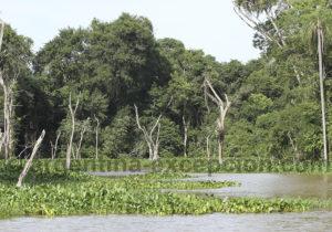 Nature des bords de la lagune Ibera