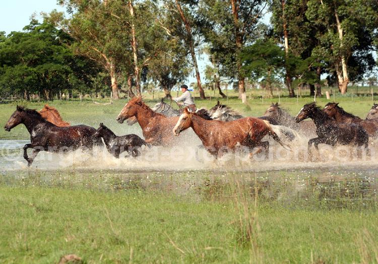 Chevaux au galop, Corrientes