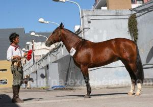 Concours de chevaux, La Rural