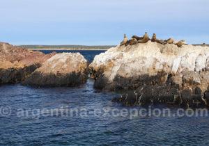Parc marin de Patagonie Bahia Bustamante