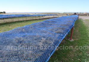 Séchage d'algues marines Bahia Bustamante