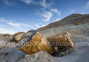 Arbres fossilisés estancia Bahia Bustamante