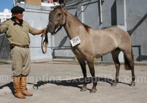 Concours de chevaux, Buenos Aires