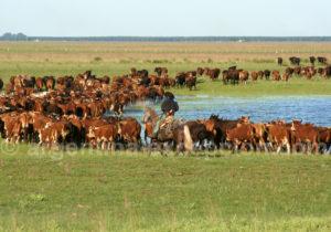 Ganadería, province de Corrientes