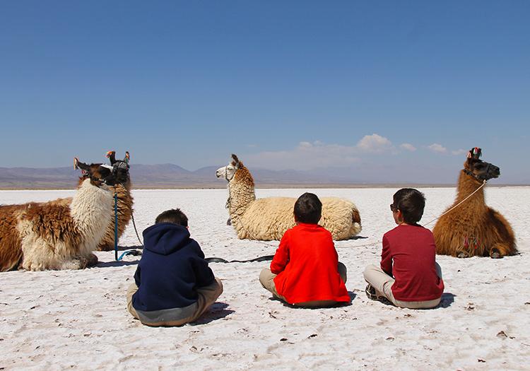 Caravane de lamas dans la Noroeste argentin