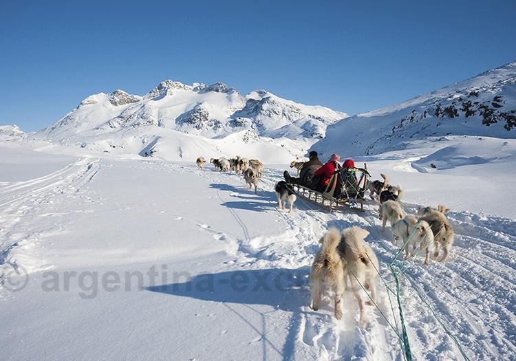 Chiens de traineau à Ushuaia