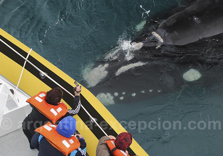 Circuits d'exception à la rencontre des baleines