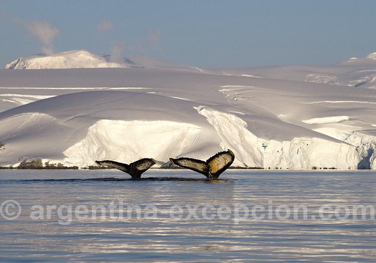 Croisiere dans la péninsule Antarctique @ Evelyne Pfeiffer