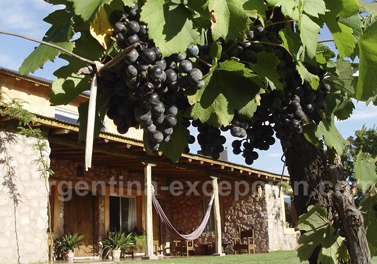 Dégustation des meilleurs vins argentins