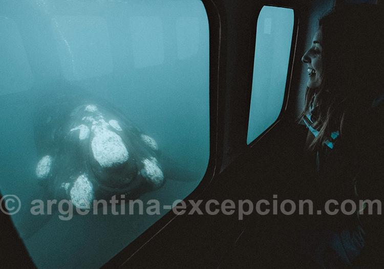 Excursion baleines avec le Yellow Submarine, Puerto Piramides