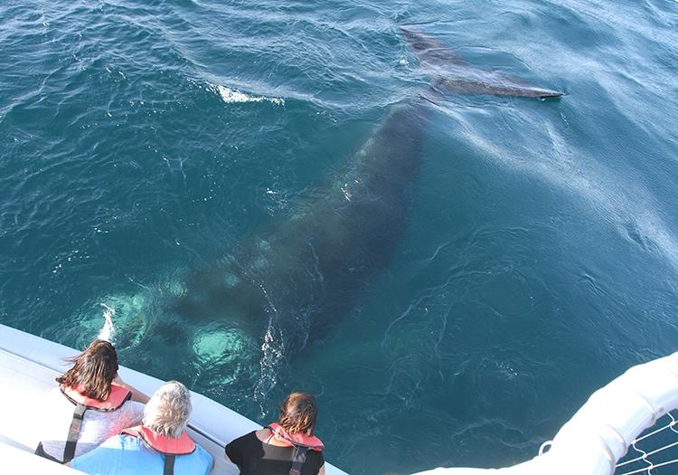 Excursion nautique baleine
