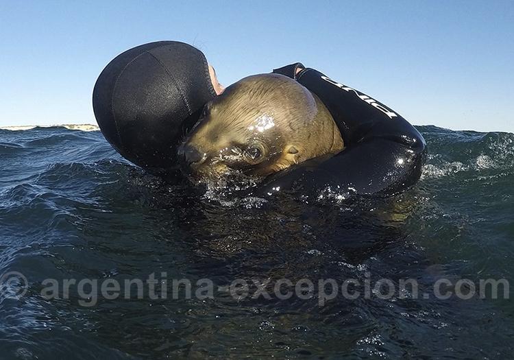 Informations de la plongée avec les lions de mer a Puerto Madryn