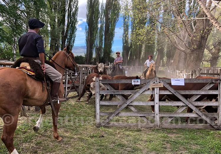 L'activité d'élevage à San Martin de Los Andes