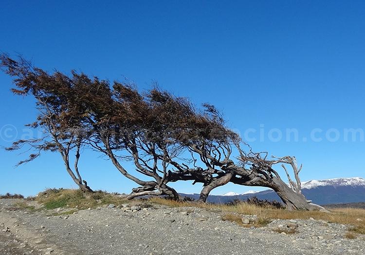 Les plantes et le vent de Patagonie