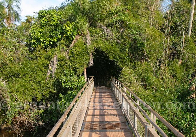 Les sentiers d'Iguaçu