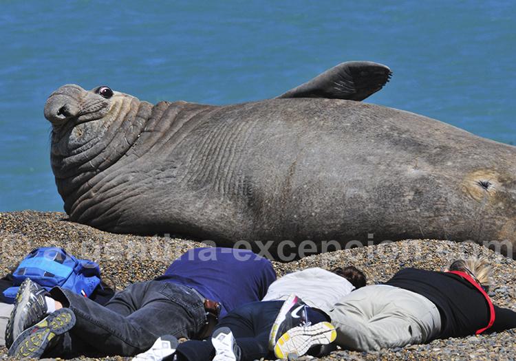 Observateurs d'éleéphant de mer à El Pedral, casa de Campo