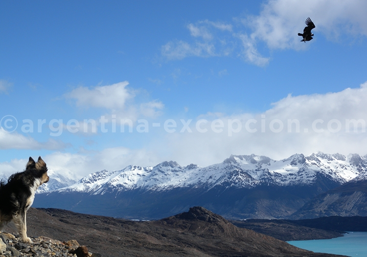 Oiseaux et mammifères en Patagonie