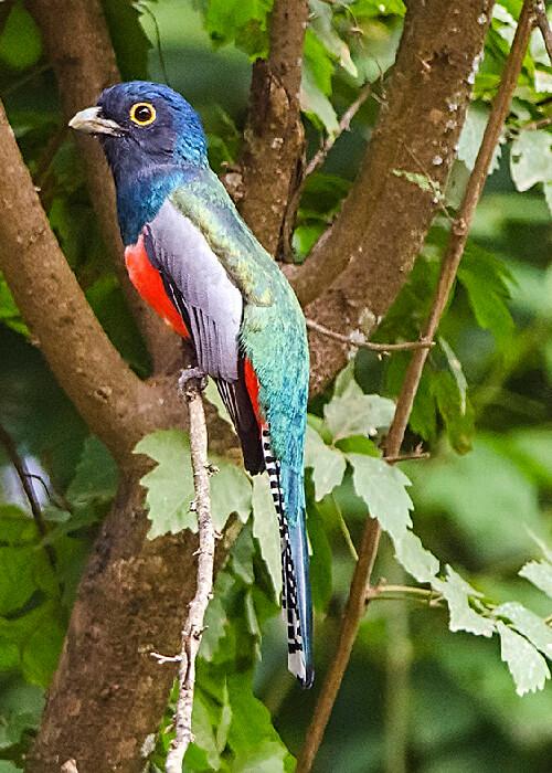Oiseaux tropicaux d'Argentine