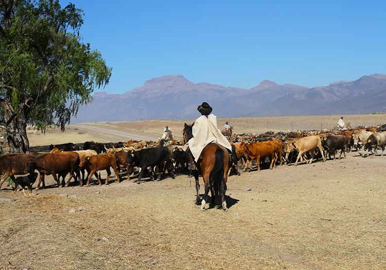 Pampa Grande