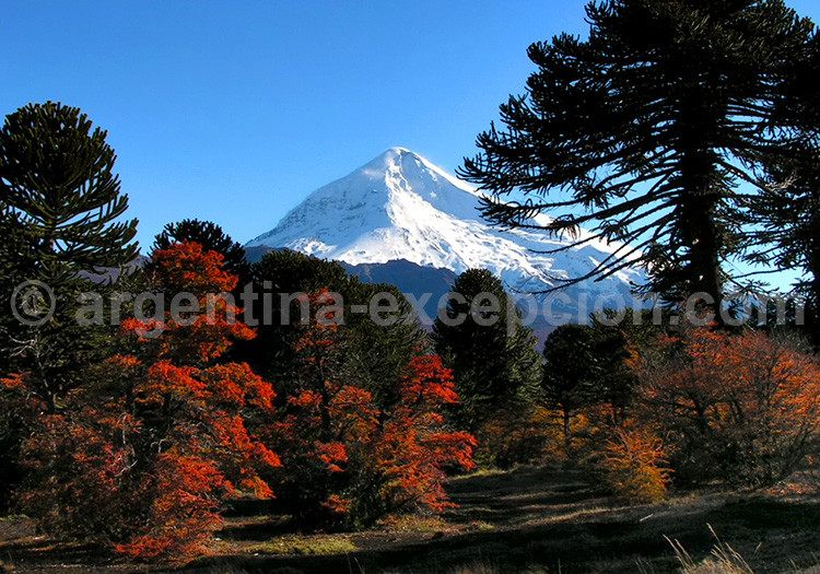 Parc National Lanin- Bariloche
