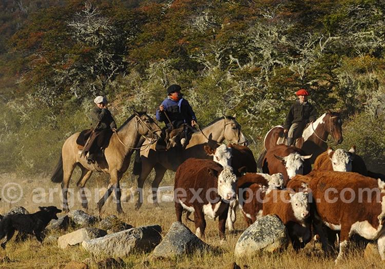 Participation au labeur des gauchos à Bariloche