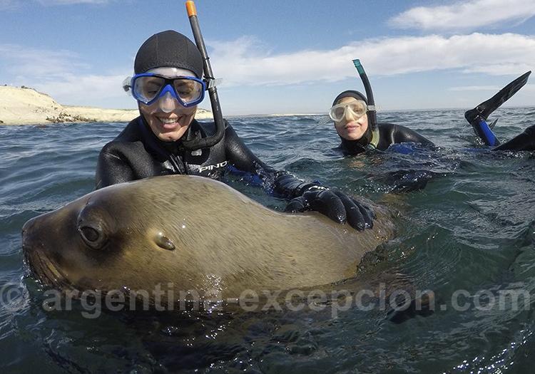 Plongée avec les lions de mer à Puerto Madryn