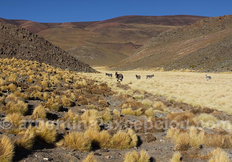 Route 40, Altiplano de Jujuy