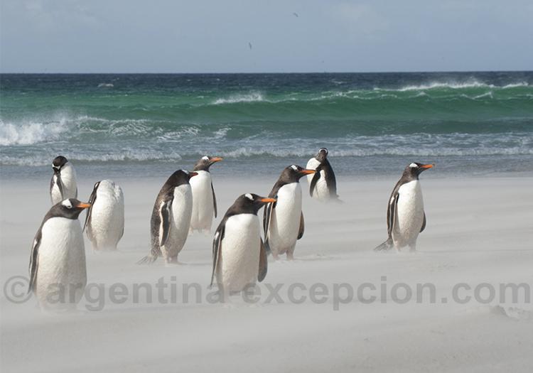 Safari photos dans les iles Fakland @ Erwin Vermeulen