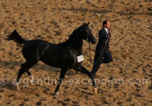 Salon Nuetsros caballos, Argentine