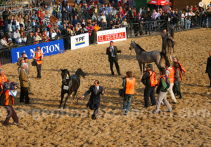 Salon du cheval, Nuetros caballos, Buenos Aires
