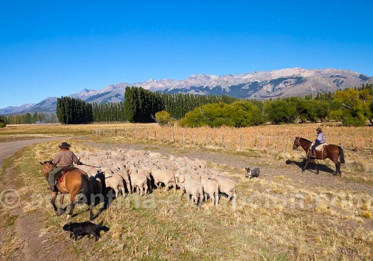 Traverser la Patagonie sur la Route 40