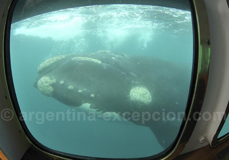 Valdés et sa faune marine
