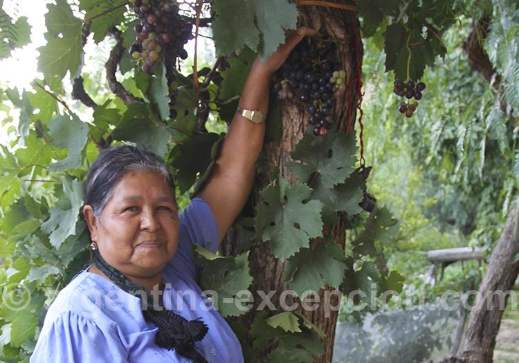 Vins Boliviens