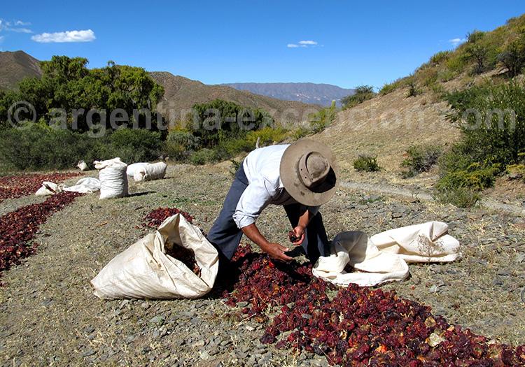 La Poma, province de Salta