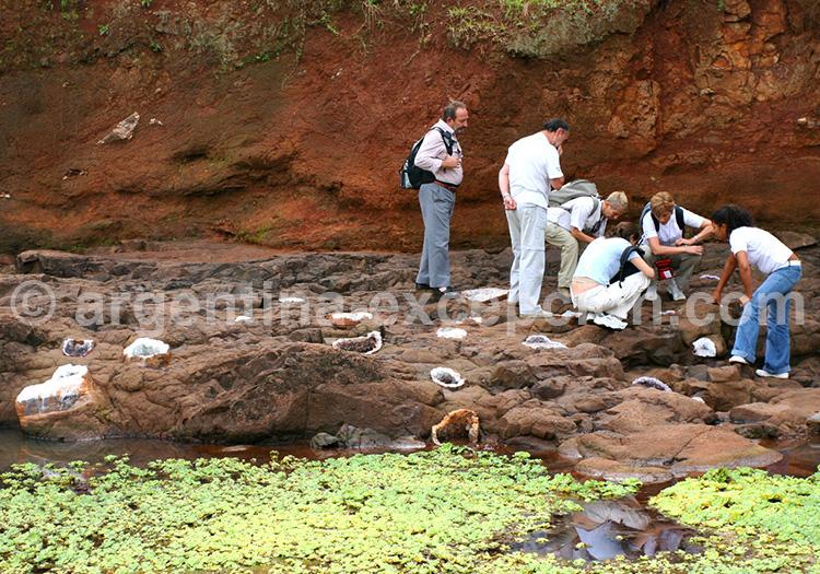 Mines de Wanda, Puerto Iguazu