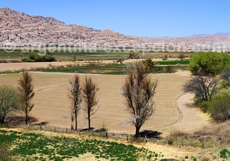 Vallées Calchaquíes, province de Salta
