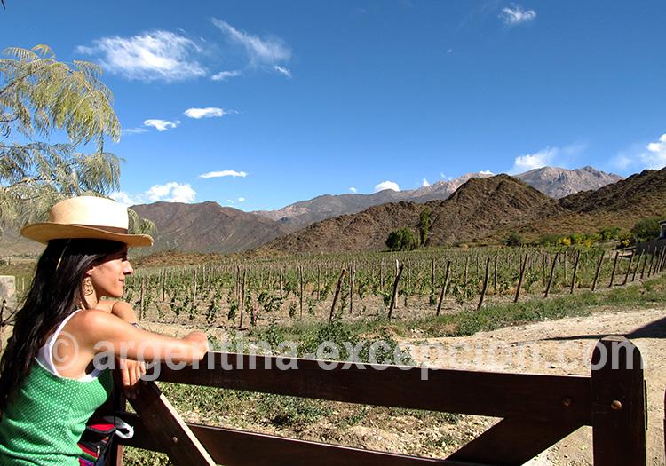 Visite de vignobles dans les vallées Calchaquies