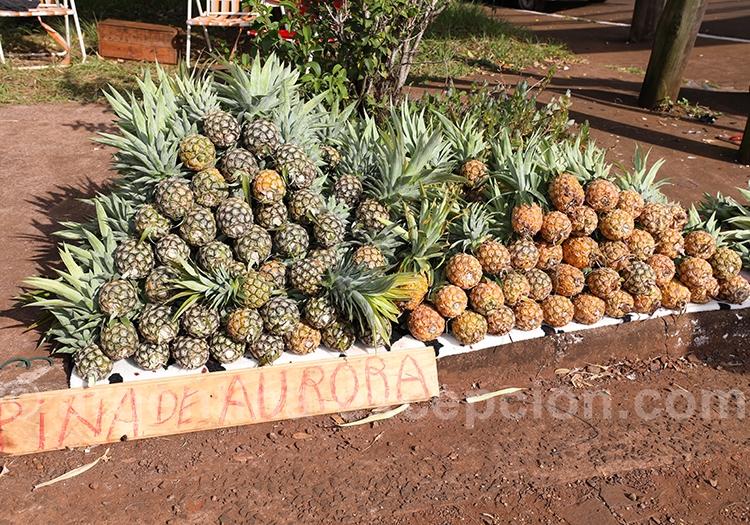 Les ananas délicieux de Misiones
