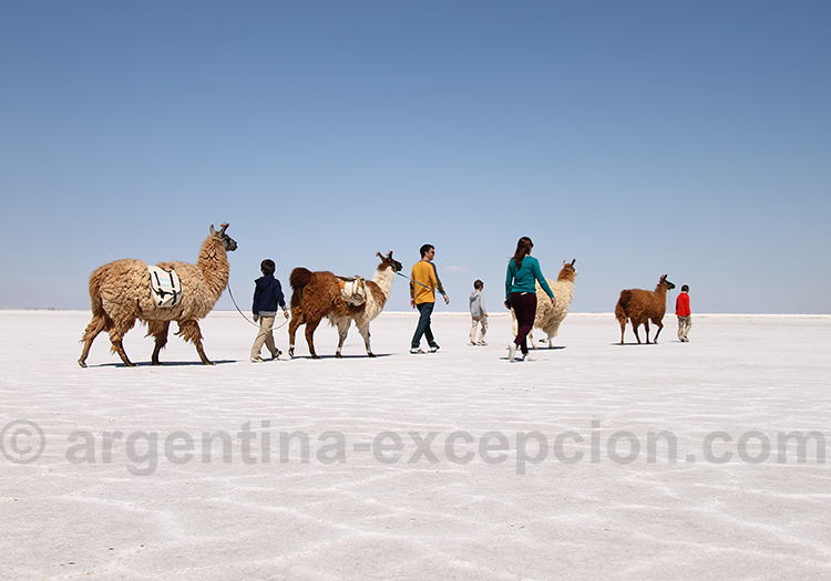 Balade avec les lamas a Salinas Grandes