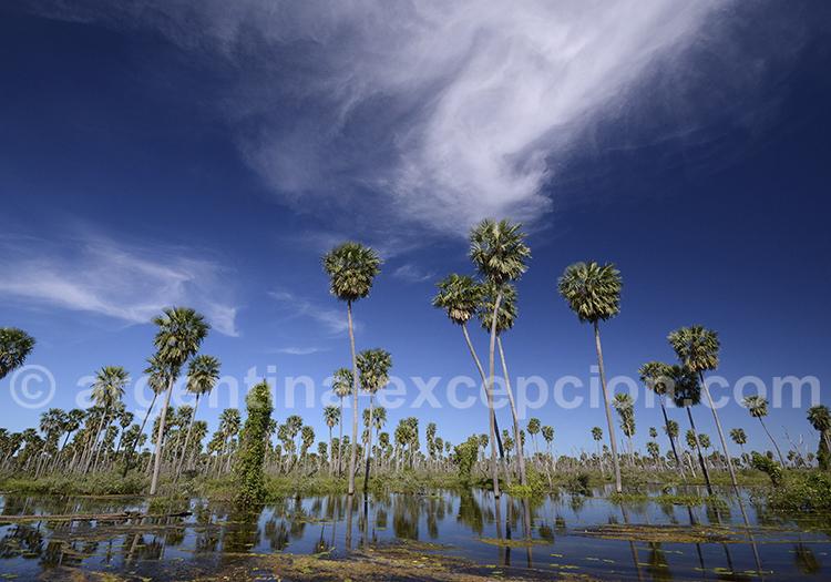 Bañado La Estrella, province de Formosa.