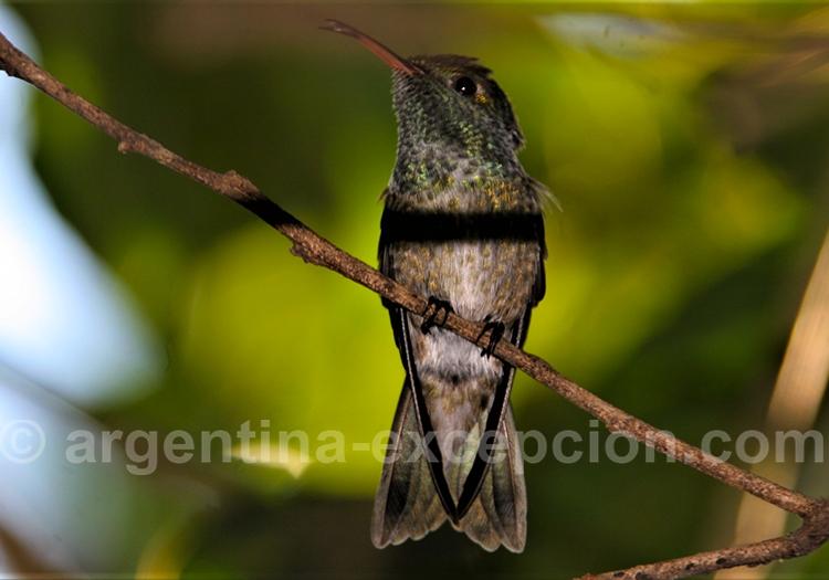 Jardin des oiseaux mouches à Puerto Iguazu