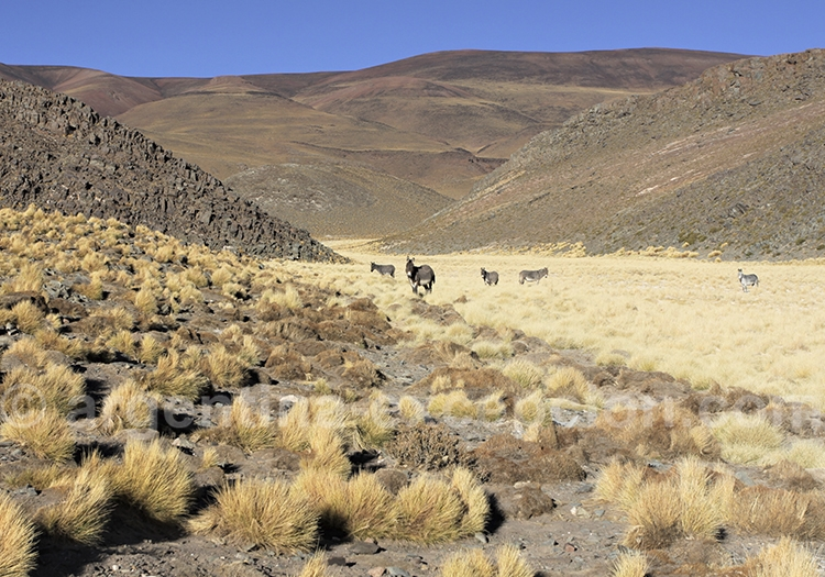 Le long de la route 40 dans le Noroeste argentin