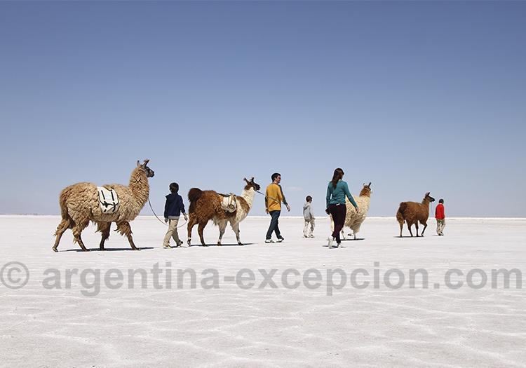 Promenade avec les lamas a Salinas Grandes