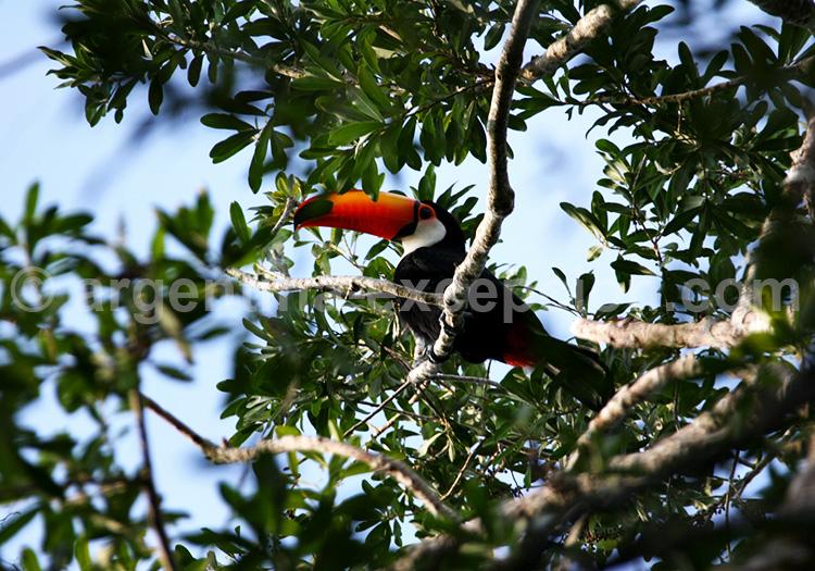 La réserve biosphere de Yaboti